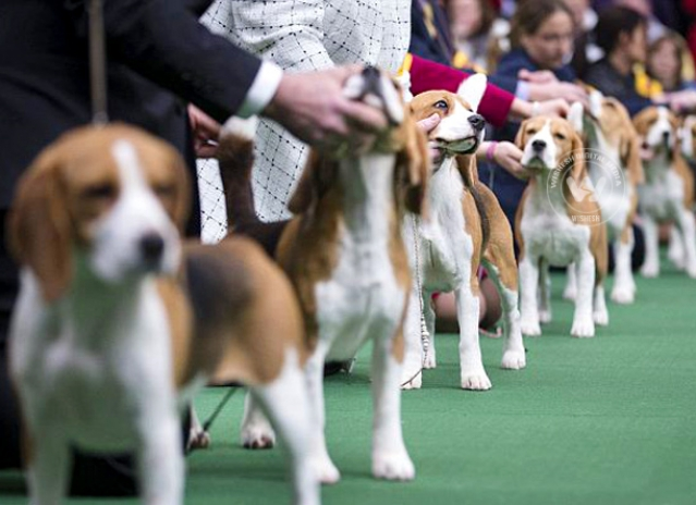 Contestants of America's Biggest Dog Show