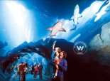 Explore Underwater world at Fakieh Aquarium