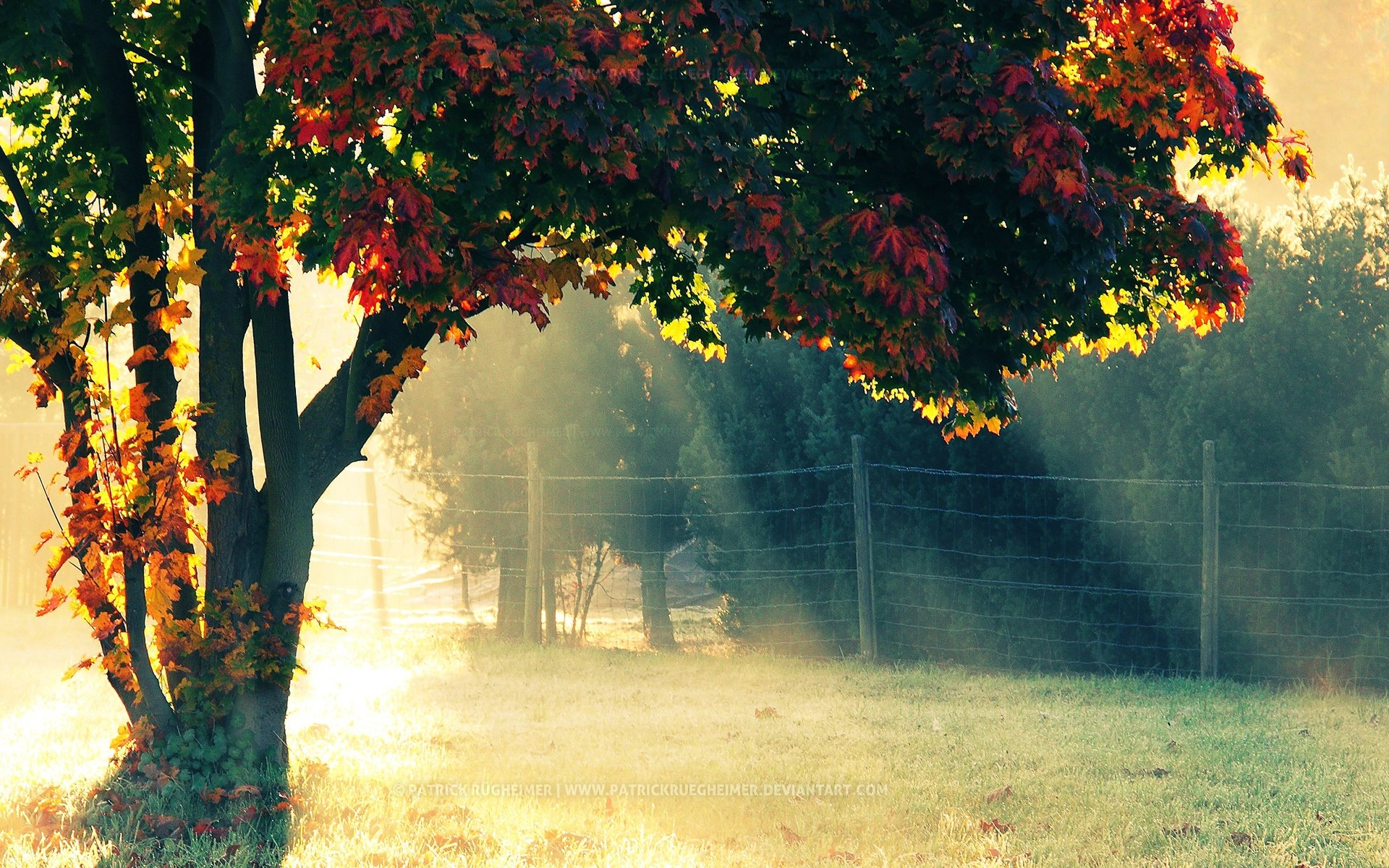 Autumn Morning
