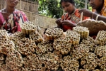 Indian Tobacco Farmers Appeal to Government to Ban E-Cigarettes