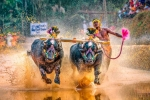 Another Kambala Racer beats Srinivasa Gowd's Record